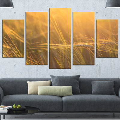Designart Wheat Field Close Up at Sunset Large Landscape Wrapped Art - 5 Panels