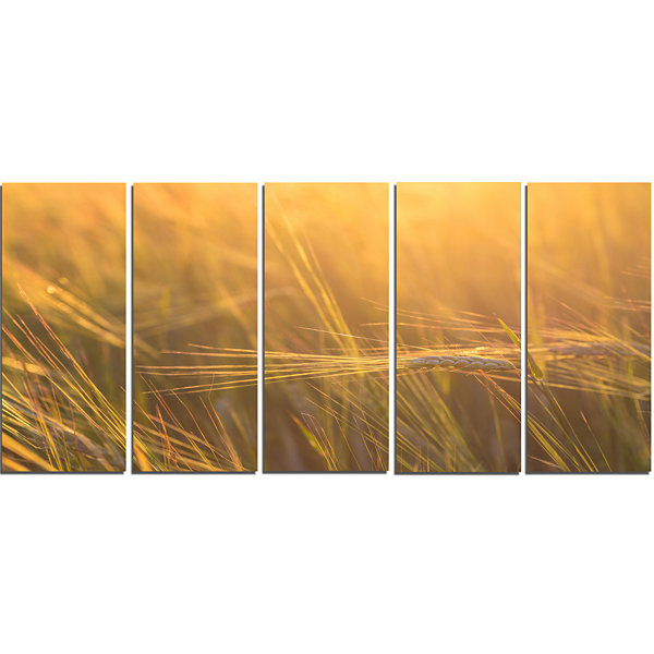 Designart Wheat Field Close Up at Sunset Large Landscape Canvas Art - 5 Panels