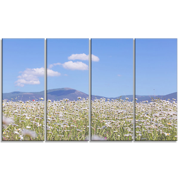 Chamomiles with Hills On Background Large Flower Canvas Art Print - 4 Panels
