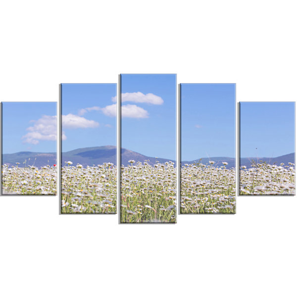 Designart Chamomiles with Hills On Background Large Flower Wrapped Canvas Art Print - 5 Panels