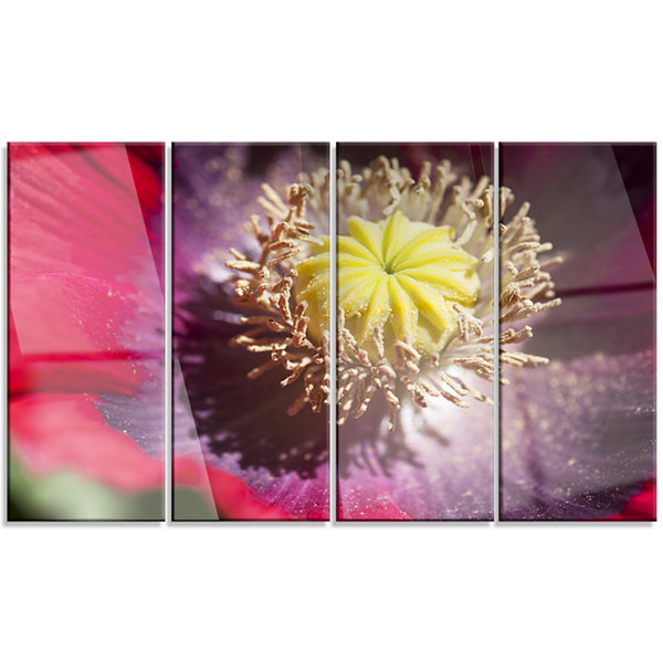 Colorful Opium Poppy Flower Photo Flowers Canvas Wall Artwork - 4 Panels