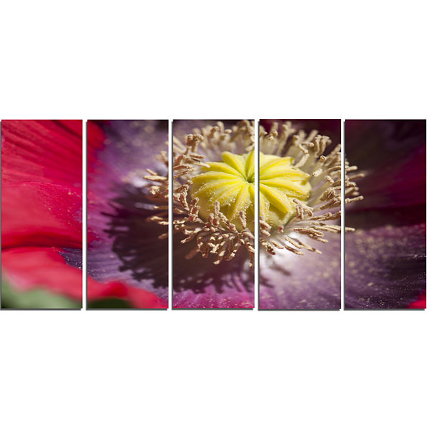 Designart Colorful Opium Poppy Flower Photo Flowers Canvas Wall Artwork - 5 Panels