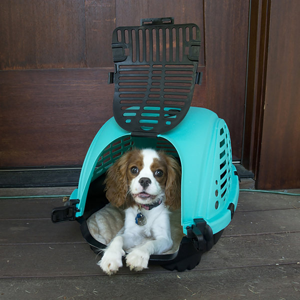 Zoompet Pet Carrier