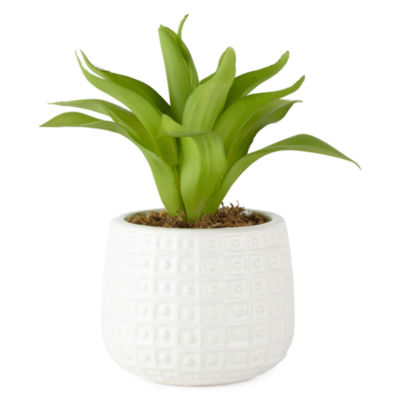 JCPenney Home Potted Plant Tabletop Decor