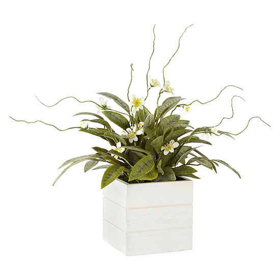 JCPenney Home Artificial Plant in Wood Box