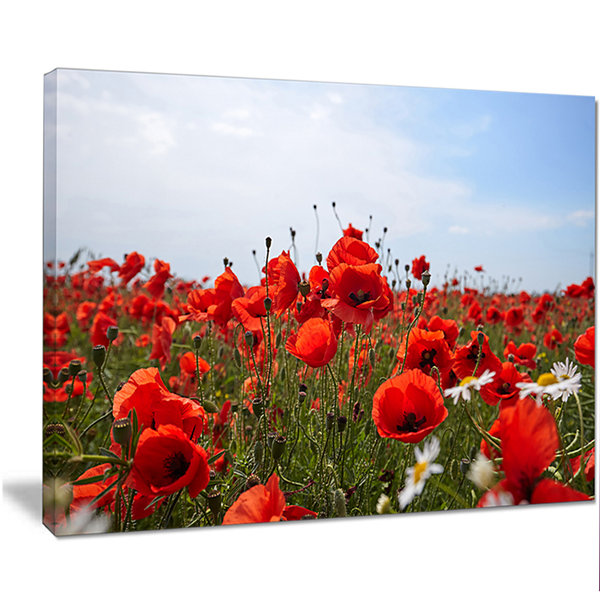Designart Red Poppies Under Bright Blue Sky FlowerArtwork On Canvas