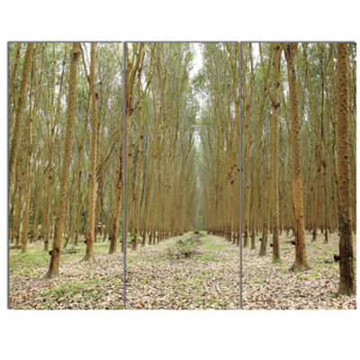 Designart Rubber Trees Row In Thailand Modern Forest Canvas Art - 3 Panels