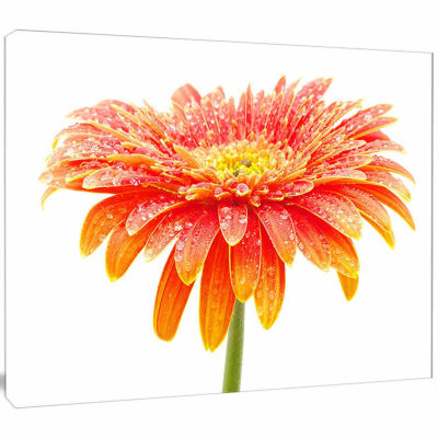 Design Art Orange Gerbera On White Floral Canvas Art Print