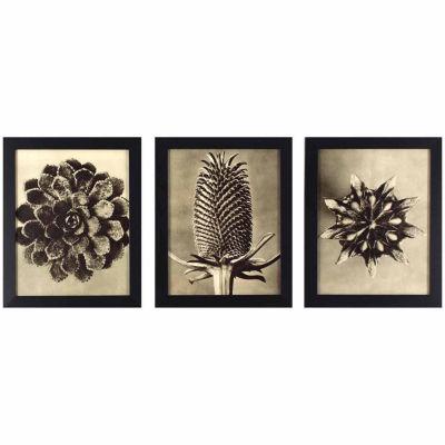 Decor Therapy Set of 3 Sepia Botany Study