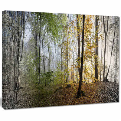 Design Art Morning Forest Panoramic View Landscape Photography Canvas Print