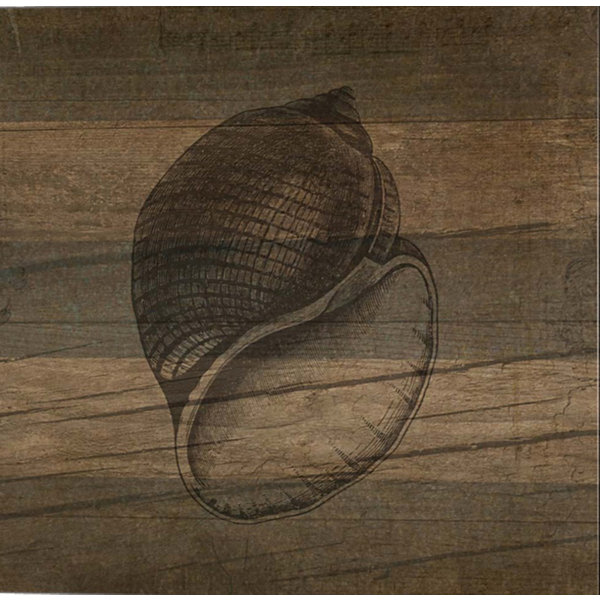 Metaverse Art Rustic Conch Gallery Wrapped Canvas Wall Art