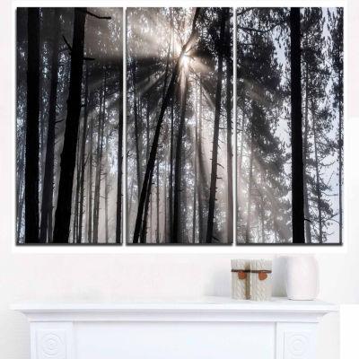 Designart Sunbeams Through Black White Forest Canvas Wall Art Print - 3 Panels