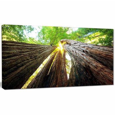 Designart Sequoia Tree Photography Canvas Art Print