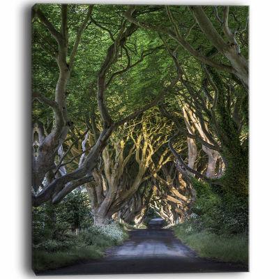 Designart The Dark Hedges Landscape Photography Canvas Art Print