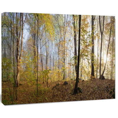 Design Art Green Autumn Forest In Morning Landscape Photography Canvas Print