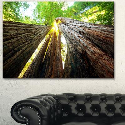 Design Art Sequoia Tree Photography Canvas Art Print