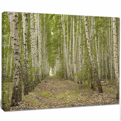 Designart Dense Birch Grove In Summer Day Forest Canvas Art Print