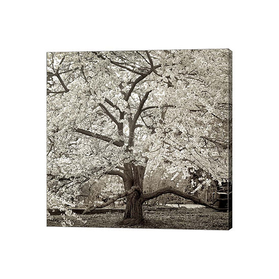 Hamption Magnolia II Gallery Wrapped Canvas Wall Art On Deep Stretch Bars