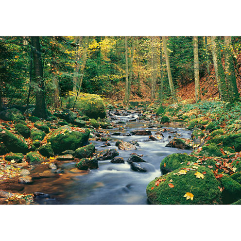 Forest Stream Wall Mural