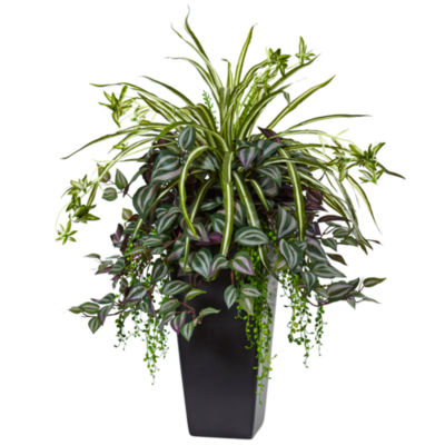 Wandering Jew and Spider Plant in Black Planter