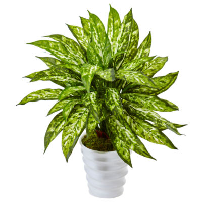 Aglaonema Silk Plant in Swirl Planter