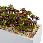 "7.75""H Sedum Artificial Arrangement in Rectangular Planter"""