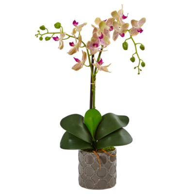 Double Phalaenopsis Silk Orchid in Gray Ceramic Planter