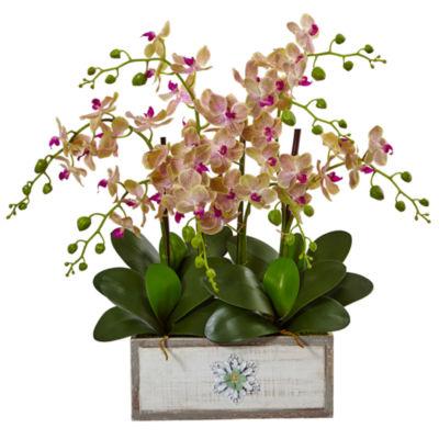 Phalaenopsis Orchid Arrangement in Decorative WoodPlanter