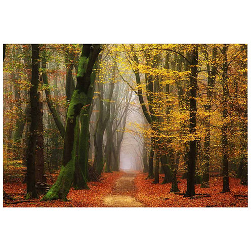 A Walk In The Forest II Canvas Wall Art