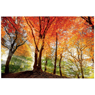 Splendor Of Autumn Canvas Wall Art