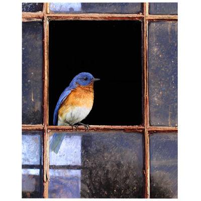 Bluebird Window Canvas Wall Art