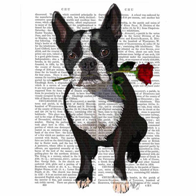 Boston Terrier with Rose Canvas Wall Art