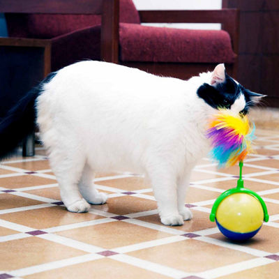 Iconic Pet Flashy Swingy Interactive Cat Toy