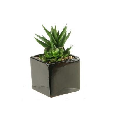 Echeveria and Aloe in Ceramic Planter