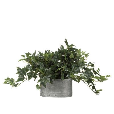 English Ivy in Metal Planter