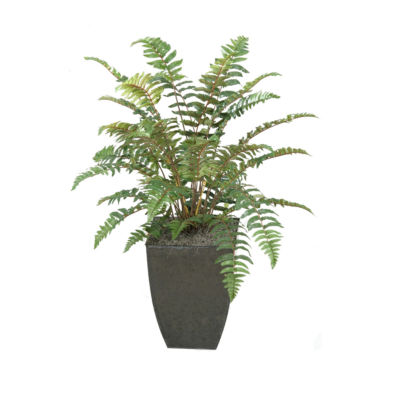 Leather Fern Plant in Metal Planter