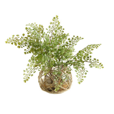 Flat Iron Fern in Glass Bowl with Seagrass Netting