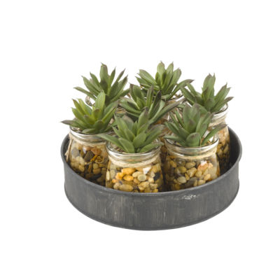 Mini Aloe Plants Set in 7 Small Glass Jars on Metal Tray