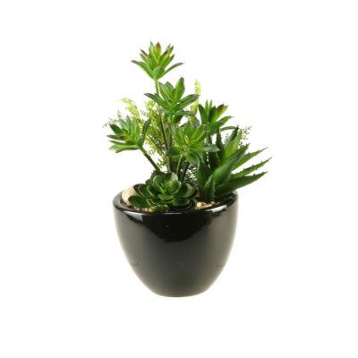Mini Dracaena Aloe and Echeveria in Ceramic Planter