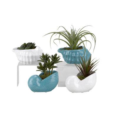 Mini Dracaena Tillandsia Succulent and Echeveria in Ceramic Shell Planter Set of 4