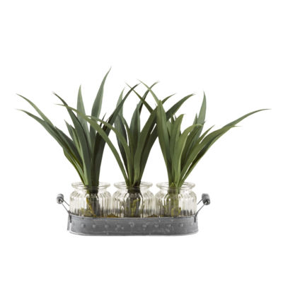 Green Lily Grass Set in 3 Glass Jars on Metal Tray