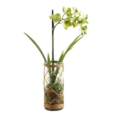 Green Vanda Orchid in Glass Vase with Seagrass Netting