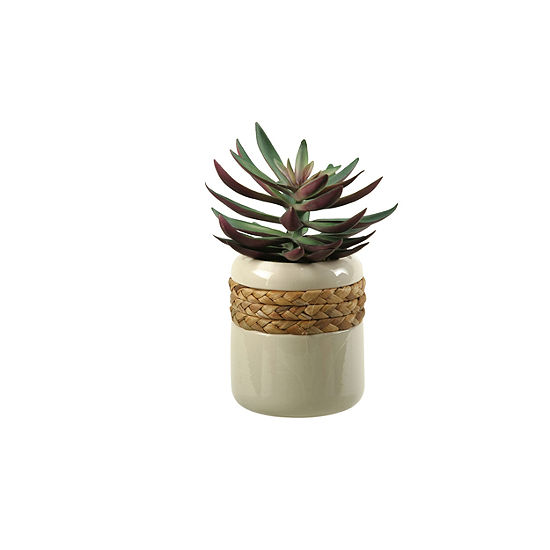 Green Plum Echeveria In Ceramic Planter