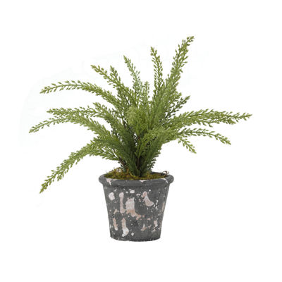 Heather Plant in Terra Cotta Pot
