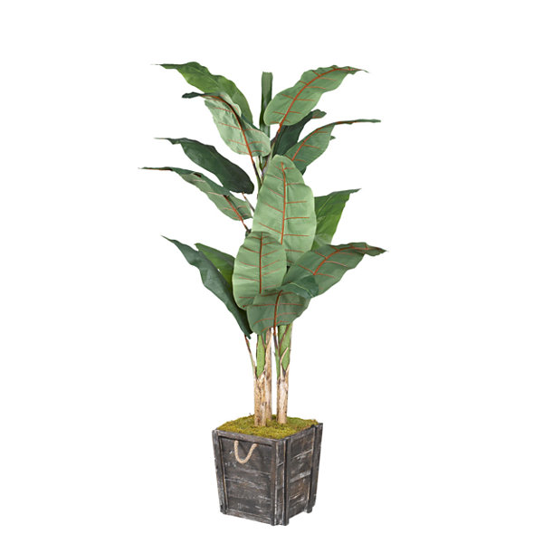 Banana Tree in Wooden Planter with Rope Handles