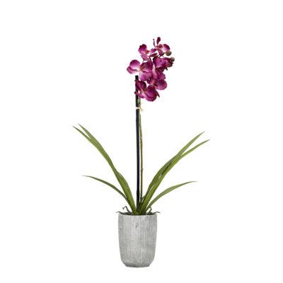Purple Vanda Orchid in Concrete Planter