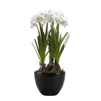 Paperwhite Bulbs in Ceramic Planter