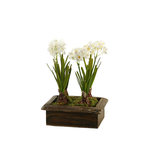 Paperwhites in Wooden Planter