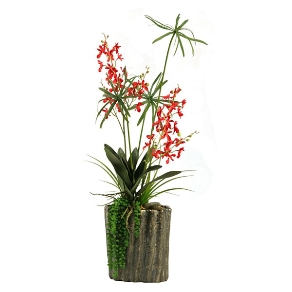 Red Baby Dendrobium Orchids in Ceramic Planter