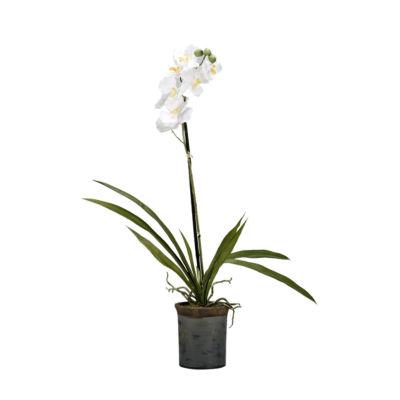 White Vanda Orchid in Ceramic Planter